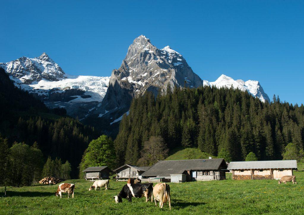 Seili Alp von Anita Kohler