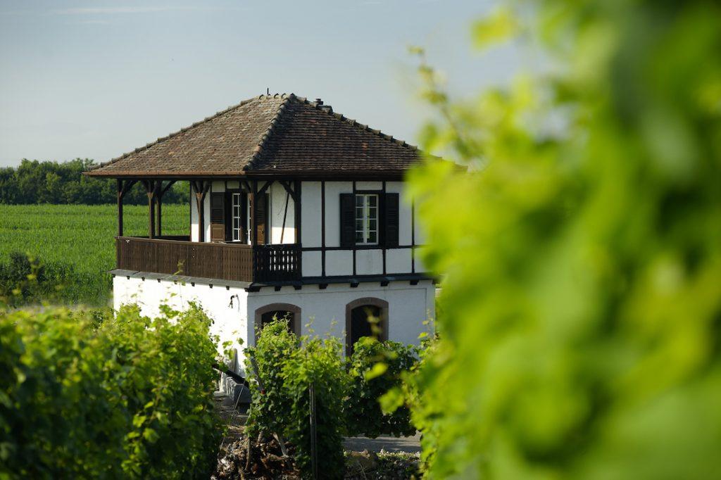 im Weinberg Weingut Stigler